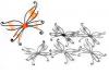 Schmetterlingsflügel orange