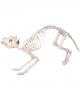 Katzen Skelett aus Kunststoff