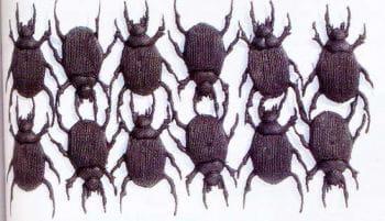 Scarabs 12 PCS