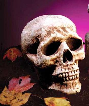 Ganzer Antik Totenschädel