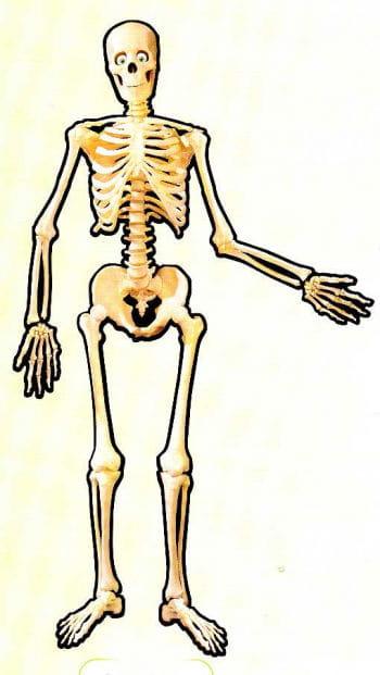 Skelett Dekoration Karton