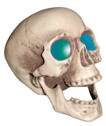 Skull with LED lighting