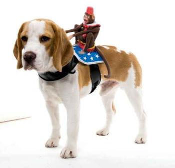 Reitender Affe Hundekostüm