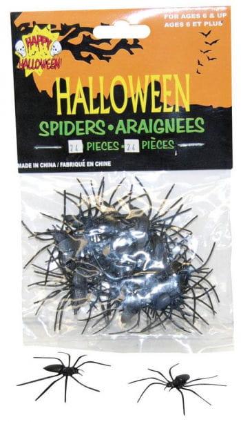 Black water spider 24 St.