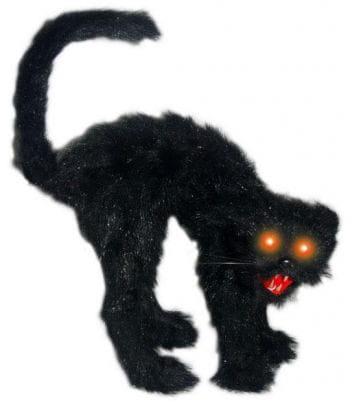 Hunchback black cat