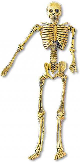 Bewegliches Mini Skelett