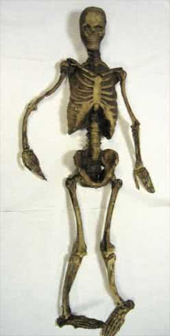 Rotted Mr Bones Skelett 84cm!