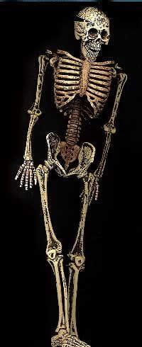 Flexy Skeleton 30cm
