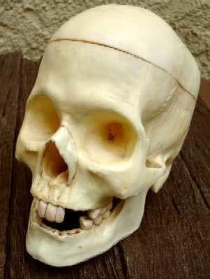 Rotting Skull / skull
