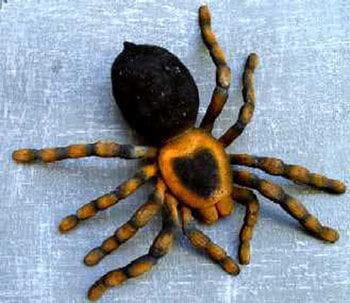 Tarantula Big