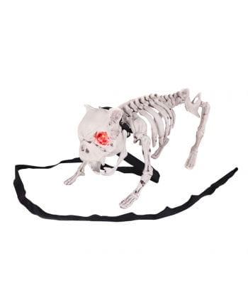 Bellender Skelett Hund