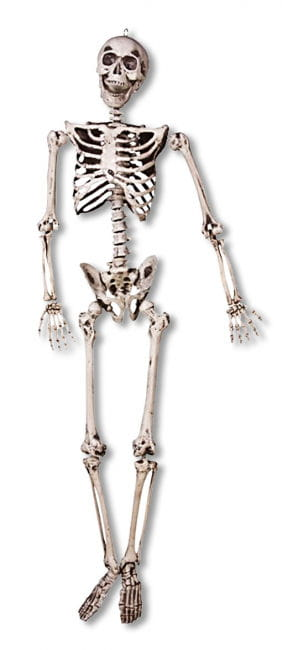 Realistic Skeleton Hanging Prop Movable