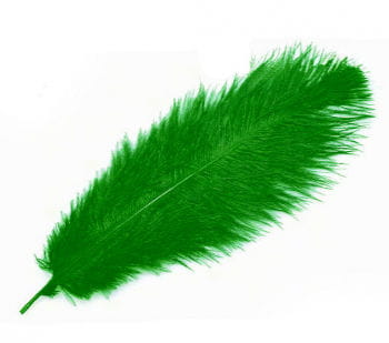 Grüne echte Straußenfeder