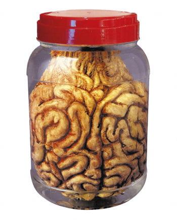 Einmachglas mit Gehirn