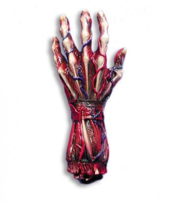 gehäutete Hand links