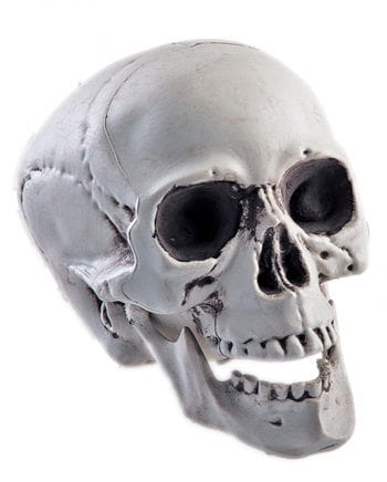 Skull with moving jaw