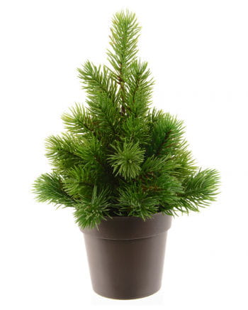 Fir tree in pot