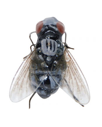 Realistische Fliege mit Magnet