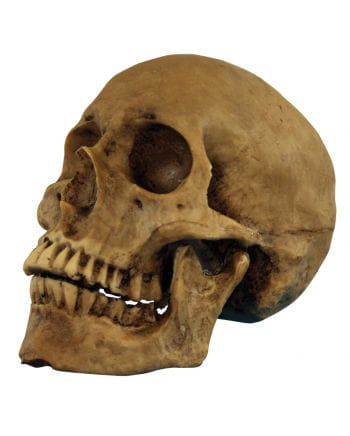 Realistischer Totenschädel Polyresin
