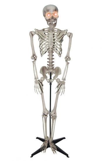 Knochenskelett als Standfigur