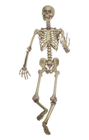 Authentische Skelett Hängefigur