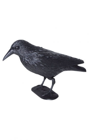 Black Crow Small