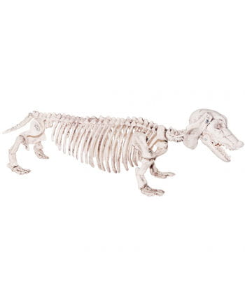 Dackel Skelett aus Kunststoff