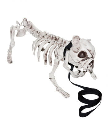 Skeleton Dog with leash