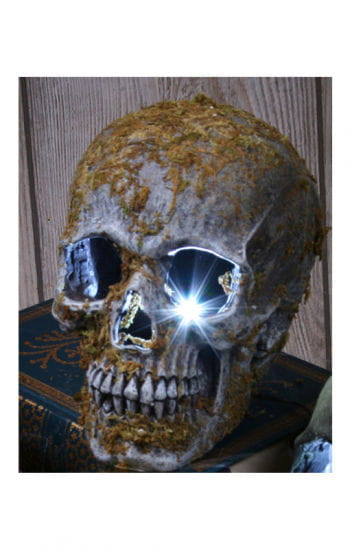 Stroboskop Schädel moosbedeckt