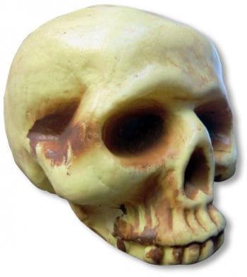 Antik-Totenschädel ohne Unterkiefer