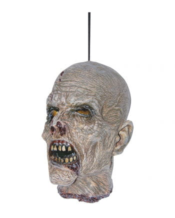 Abgetrennter Zombie Schädel aus Latex