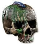 Exhumation Skull